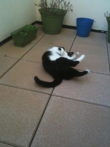 Sullivan rolling on the patio
