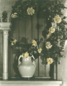 Roses in a vase, photograph by Jane Reece
