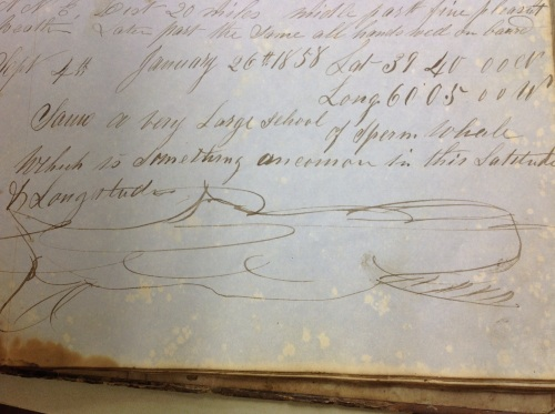 photo of handdrawn whale from whaling journal